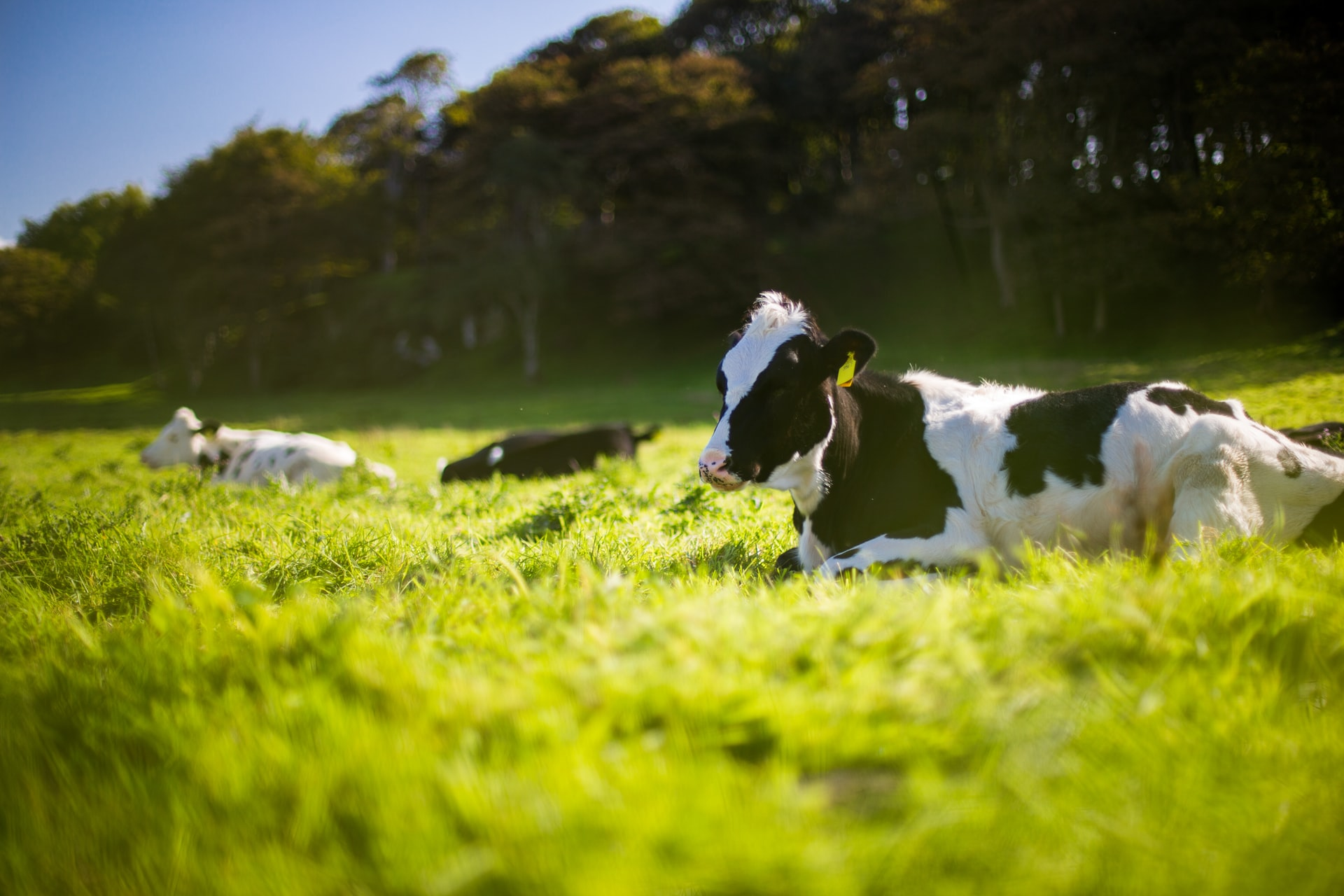 OSI Group Tackles Climate Change at the Global Roundtable for Sustainable Beef